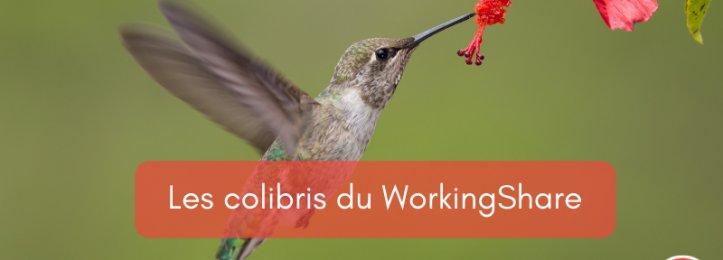 Les colibris du WorkingShare